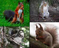 cute funny hungry squirrels say fall is here 60 pics