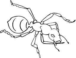 draw ant coloring page 29 for download coloring pages with ant