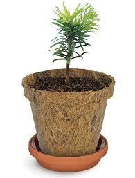 tree saplings for sale rainforest islands ferry