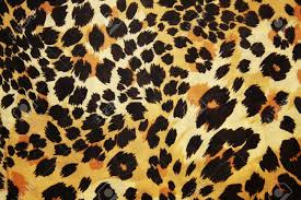 lion print abstract animal skin pattern stock photo picture and royalty free