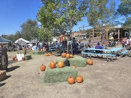 apple festival and apple picking in julian ca yummy eats and