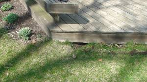to get rid of skunks under a deck