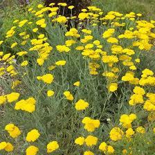 best 25 plants that like sun ideas on pinterest perennial