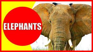 elephant drawings for kids best elephant 2017
