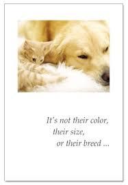 dog condolences curled white cat dog pet condolence cardthartic