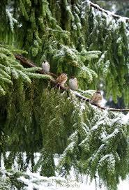 289 best i u003c3 little brown birds images on pinterest beautiful