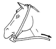 horseman tips horse