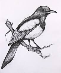 easy realistic drawings of birds
