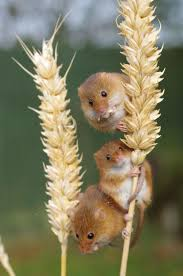 best 25 cute mouse ideas on pinterest mice funny mouse and dieren
