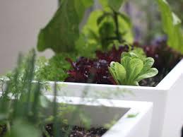 urban garden self watering planter glowpear ahalife
