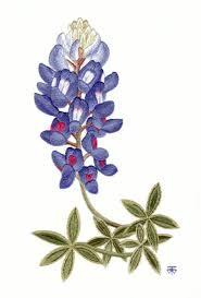 Bluebonnet Flowers - http coloringpagesplus com flowers free coloring flowers