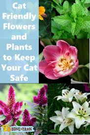 cozy cat safe flowers 1 cat safe christmas flowers find this pin