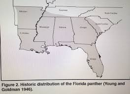 Map Of Port St Lucie Florida by Panther Sightings In Stuart Florida Jacqui Thurlow Lippisch