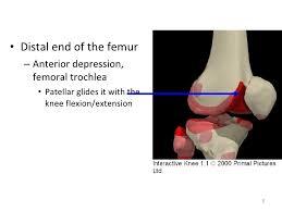 Interactive Knee Anatomy Kin191 A Ch 6 Knee Patellofemoral Anatomy