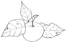 freehand clip art drawing of an apple with leaves stock
