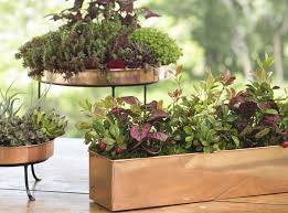caring for indoor plants houseplants gardener u0027s supply