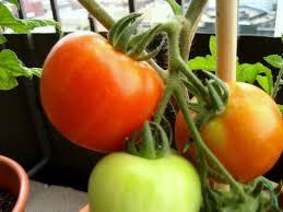 the 25 best apartment vegetable garden ideas on pinterest