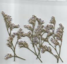 dried flowers pressed dried flowers sea lavender pack of 7 dried flowers shop