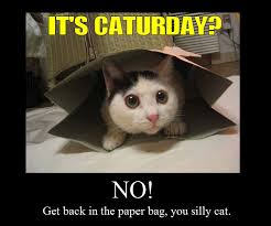 Caturday Meme - meme classics it s caturday ii