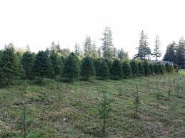 we will be closed on thanksgiving day holiday forest for 2016 holiday forest will be opening the day