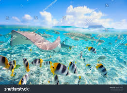 colorful fish stingray black tipped sharks stock photo 113913454