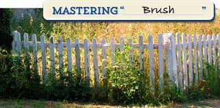 How To Cut Weeds In Backyard Secrets To Getting Rid Of Brushy Weeds Bayer Advanced