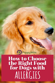 best 25 grain free dog food ideas on pinterest gluten free dog