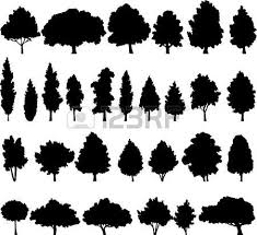 1 737 cypress stock vector illustration and royalty free cypress