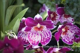 Tropical Fragrant Plants - fragrant house plants