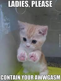 Cute Kittens Meme - kitten fun cat pictures