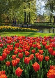 keukenhof o jardim mais bonito do mundo gardens spring and