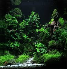 Aquascapes Of Ct 69 Best Fish Tank Ideas Images On Pinterest Aquarium Ideas