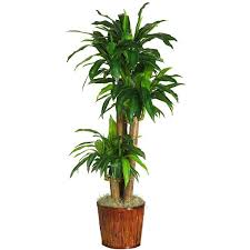 indoor trees that don t need light 17 of the best indoor plants which don t need sunlight serenity