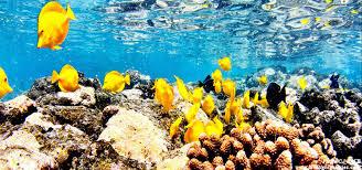 Hawaii snorkeling images Snorkel cruises tour kona waikoloa big island hawaii jpg