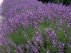 12 Best Annual Flowers For by 12 Best Annual Flowers For A Sunny Site Flower Plants And Gardens