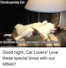 Thanksgiving Cat Meme - thanksgiving cat iz thankful for sdeshull noms and maltime