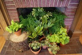 Indoor Plant Design by Decorating Our Homes With Plants Interior Design Explained