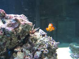 Live Rock Aquascaping Ideas How To Work With Live Rock In A Marine Aquarium