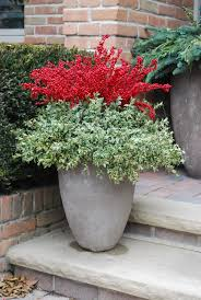 michigan holly dirt simple container gardens winter