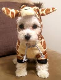 White Dog Halloween Costume Baby Giraffe Giraffe Animal Dog