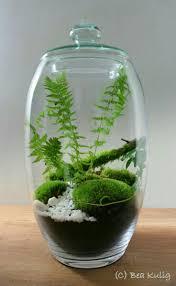 432 best terrariums images on pinterest terrarium ideas