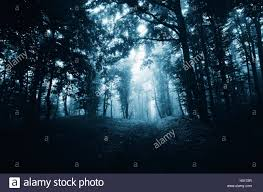 dark halloween background dark forest path scary halloween night atmosphere background