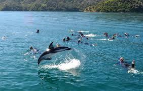 best time to see new zealand u0027s wildlife tourism new zealand media