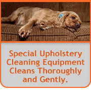 upholstery cleaning orange county carpet cleaning orange county the best carpet cleaning service in