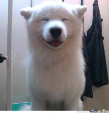 Happy Dog Meme - just a happy dog by muhammad a ikram meme center