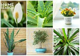 best plants for air quality summa realty 13 indoor plants to improve your home s air quality