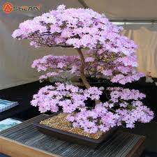 best japanese cherry blossom tree products on wanelo