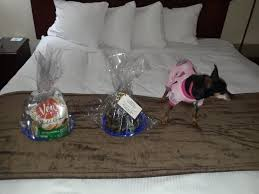 gift packages and pets get gift packages picture of best western