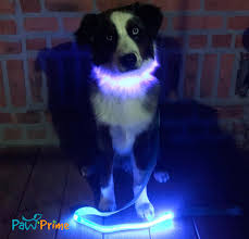 paw prime usb rechargable led collar