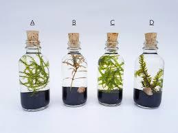 live aquatic plants terrarium kit bottle with cork for office